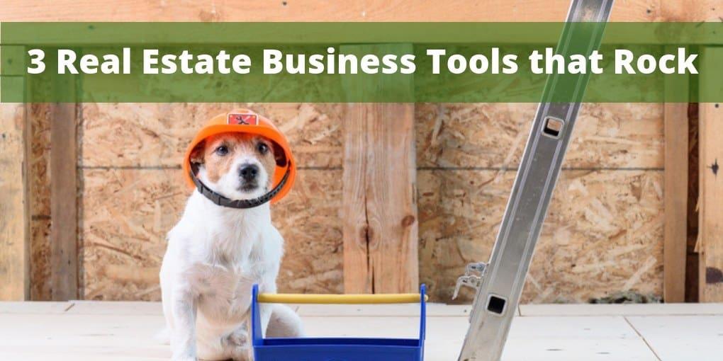 dog next to tool box