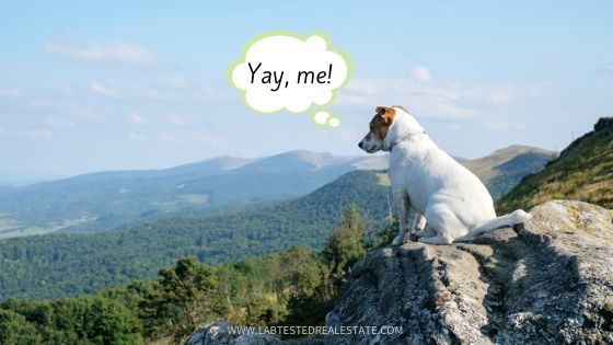 dog on mountain looking at the view