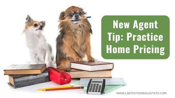 two dogs with books and calculator